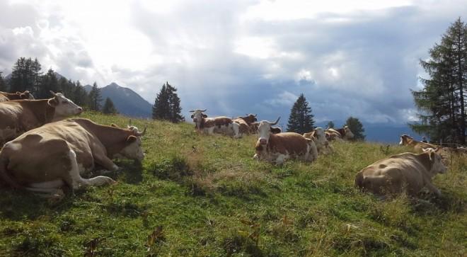 Referendum: perché gli svizzeri l'hanno capito e noi no?